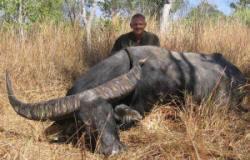 Australian Outfitter Water Buffalo Hunts