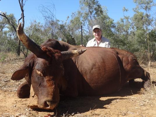 Hunting Scrub Bull