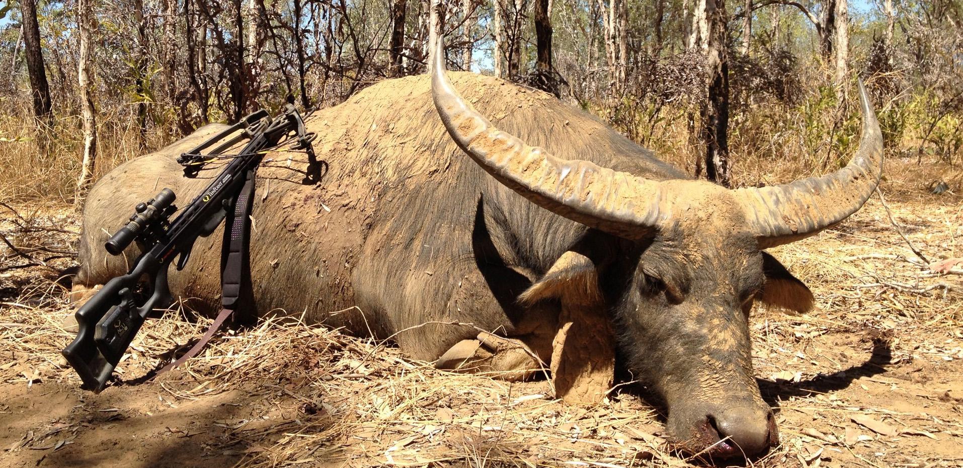 waterbuffalo_slider
