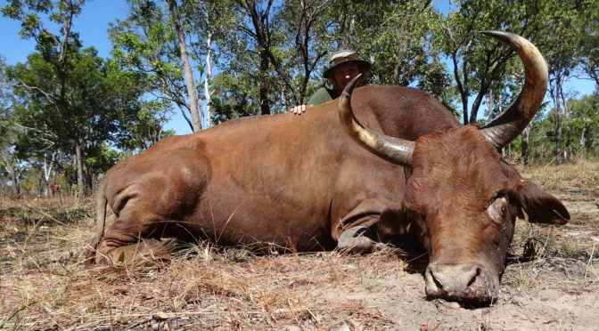 Australian Outfitters by Andrew Mackay, Scrub Bulls